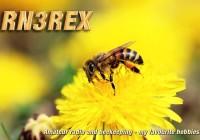 RN3REX